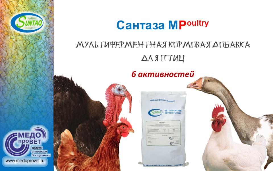 Презентация Сантаза MP Новая