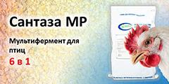 Сантаза MP